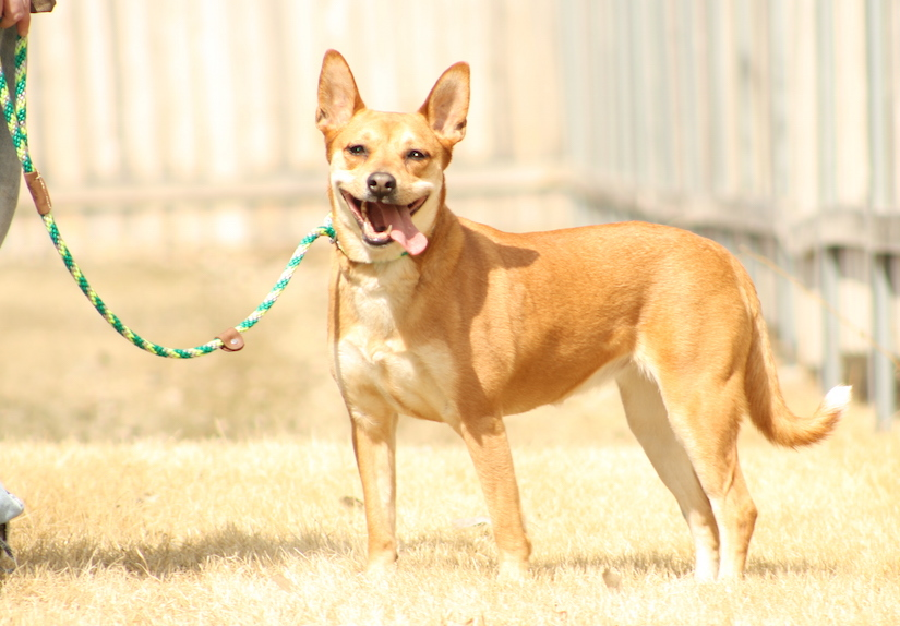 The Top 3 Leashes for Everyday Dog Ownership