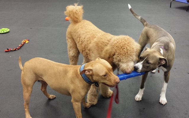 Is Dog Daycare Right for Your Dog?