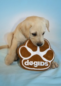 Puppy with dogIDs logo
