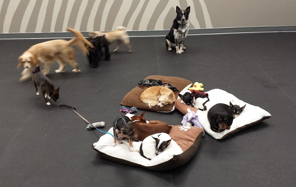 Dogs in a daycare