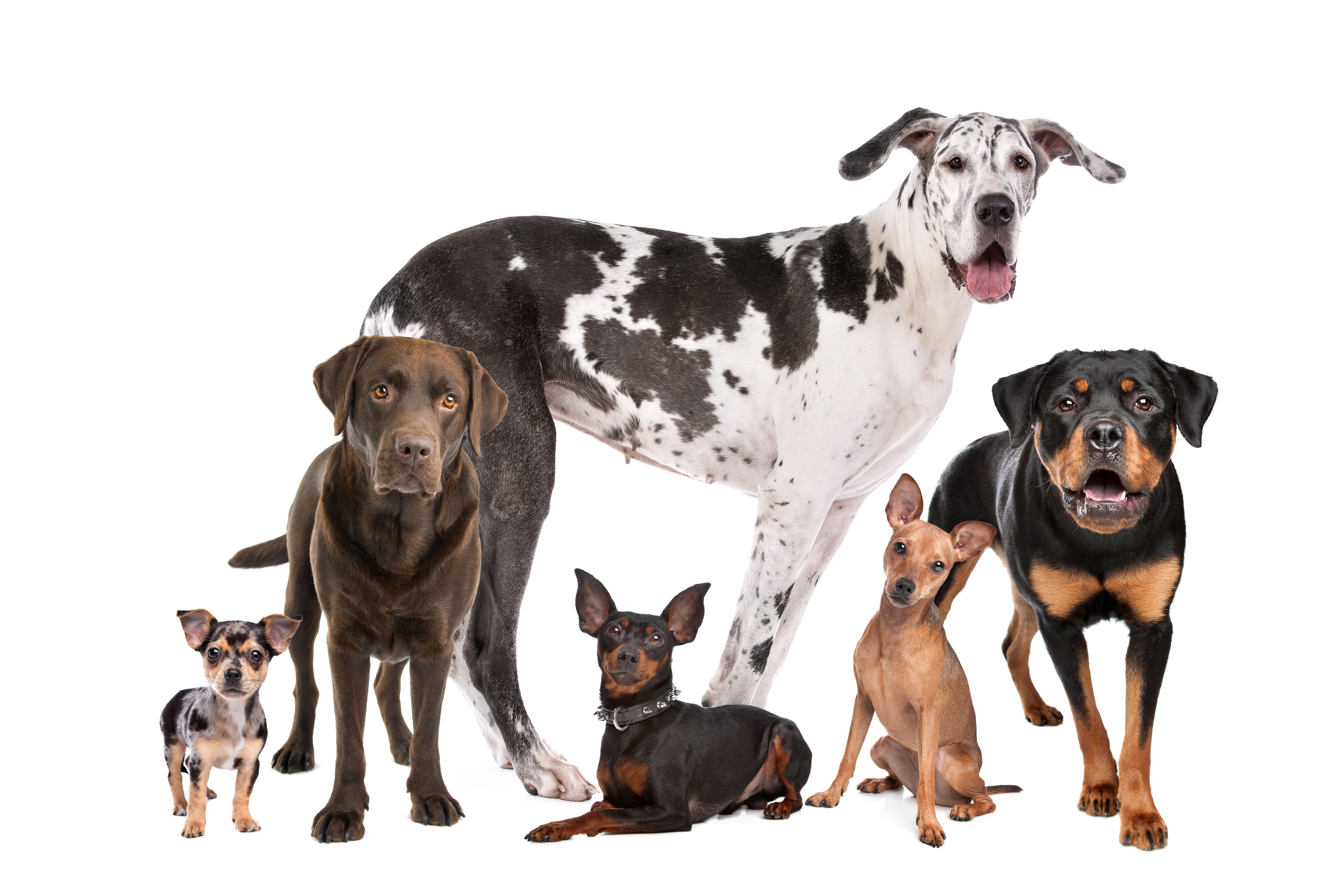 Popular Dog Breeds (and Which Might Be Right for You!)