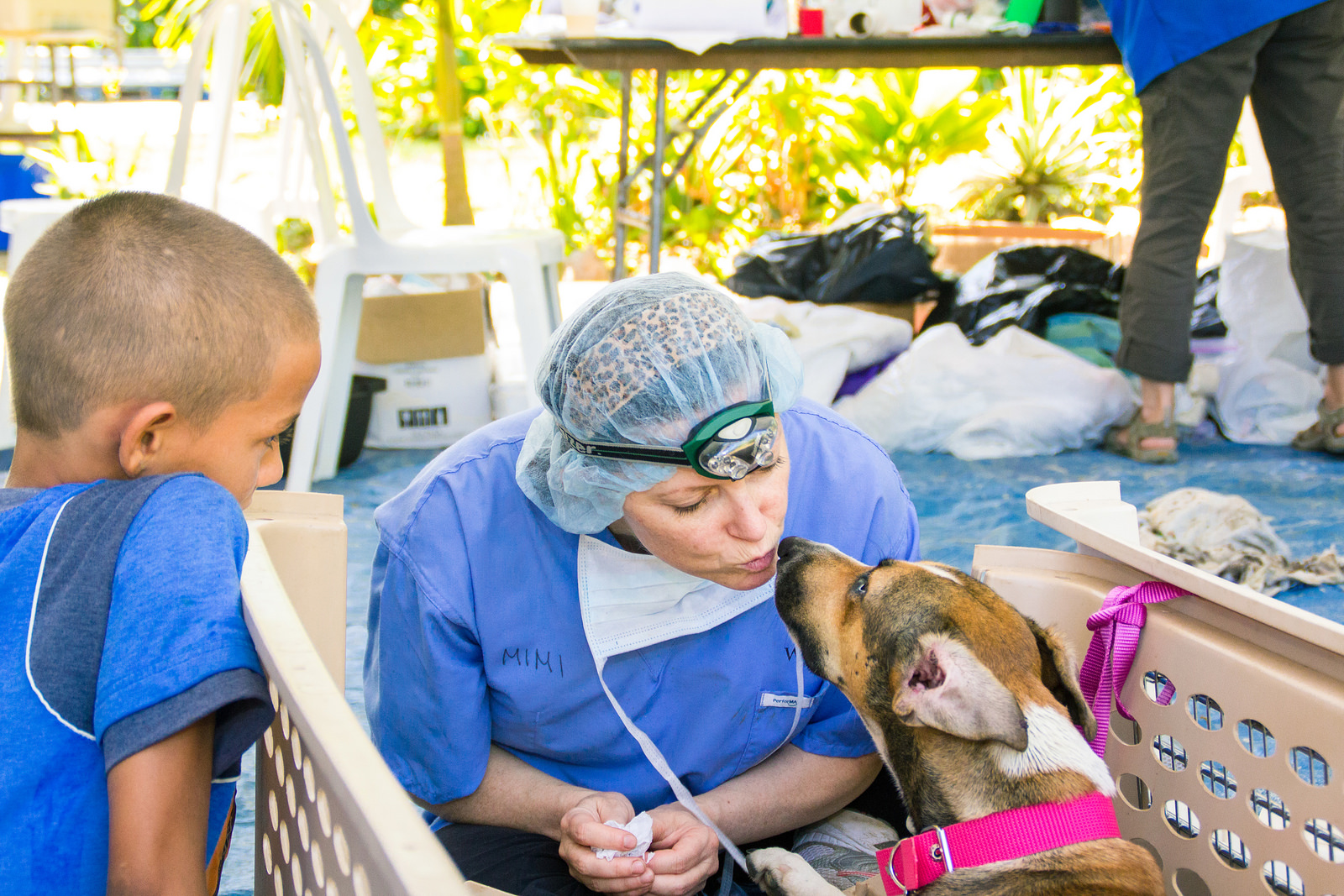 "dogIDs Continues to""Paw it Forward"" with World Vets"