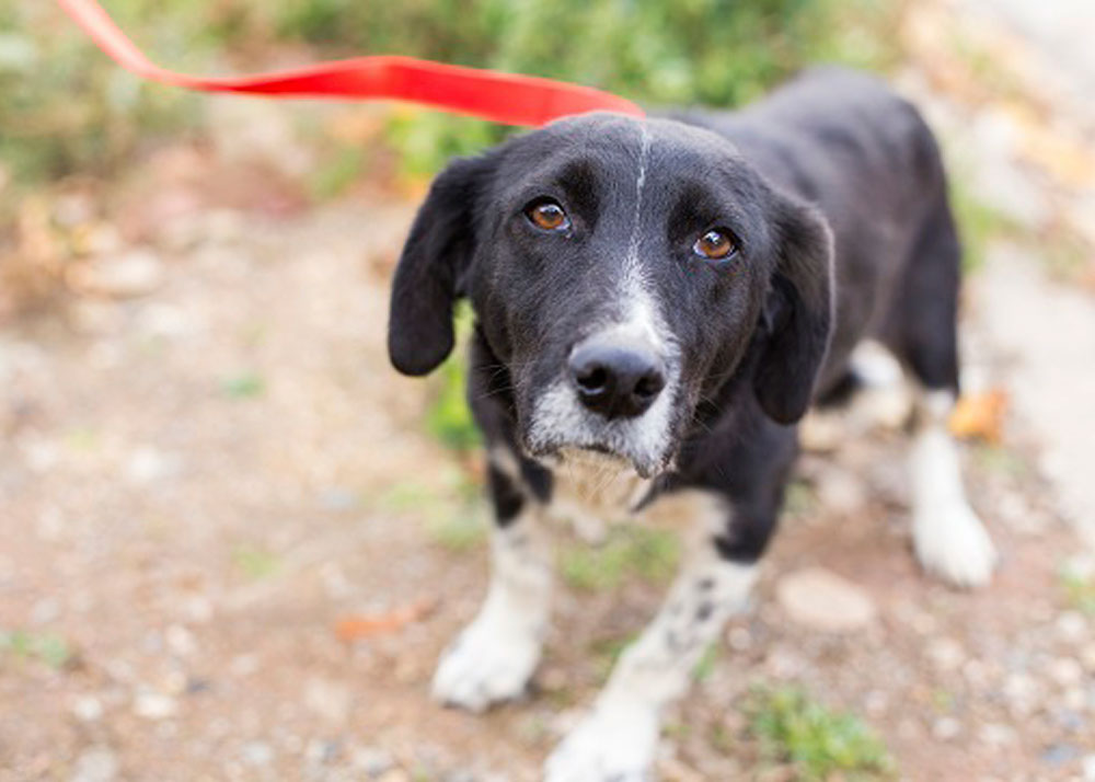 Common Fears in Dogs and How You Can Help