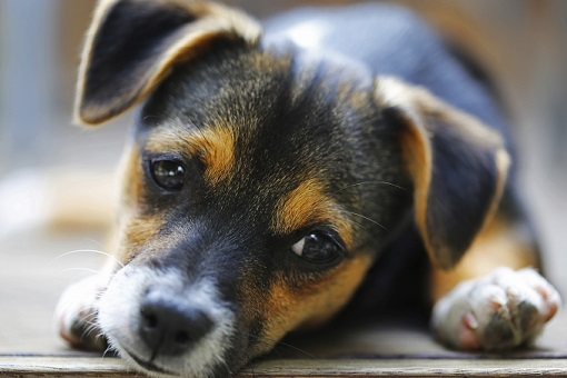 How to get your puppy tired