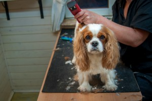 3 Spring Grooming Tips for a Happy Dog