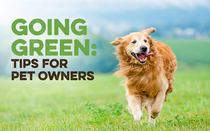 Going Green: Tips for Pet Owners