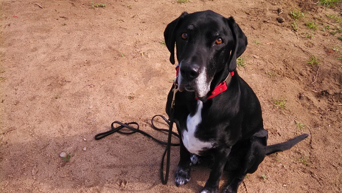 Ace the mutt