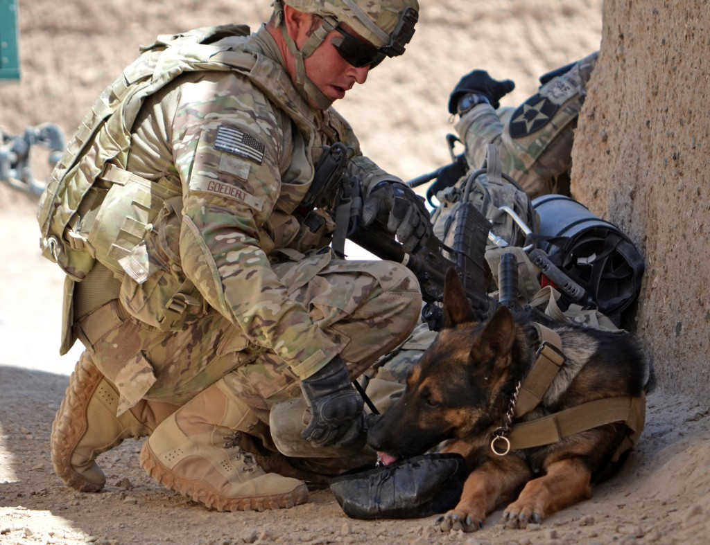 Sargent and his military working dog