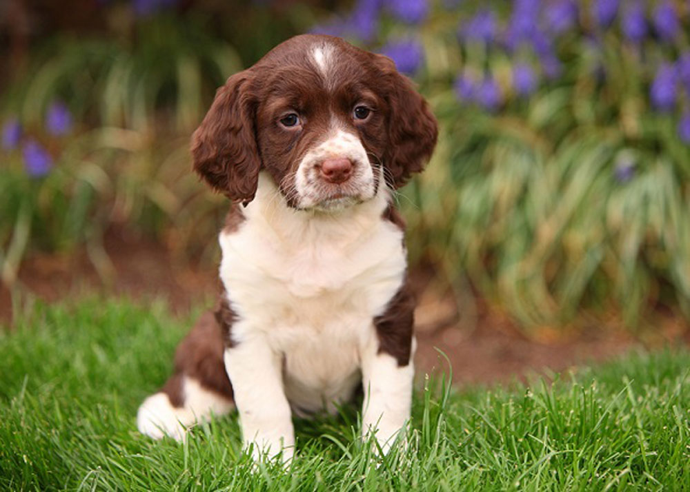 What are the First Things You Should Teach a New Puppy?