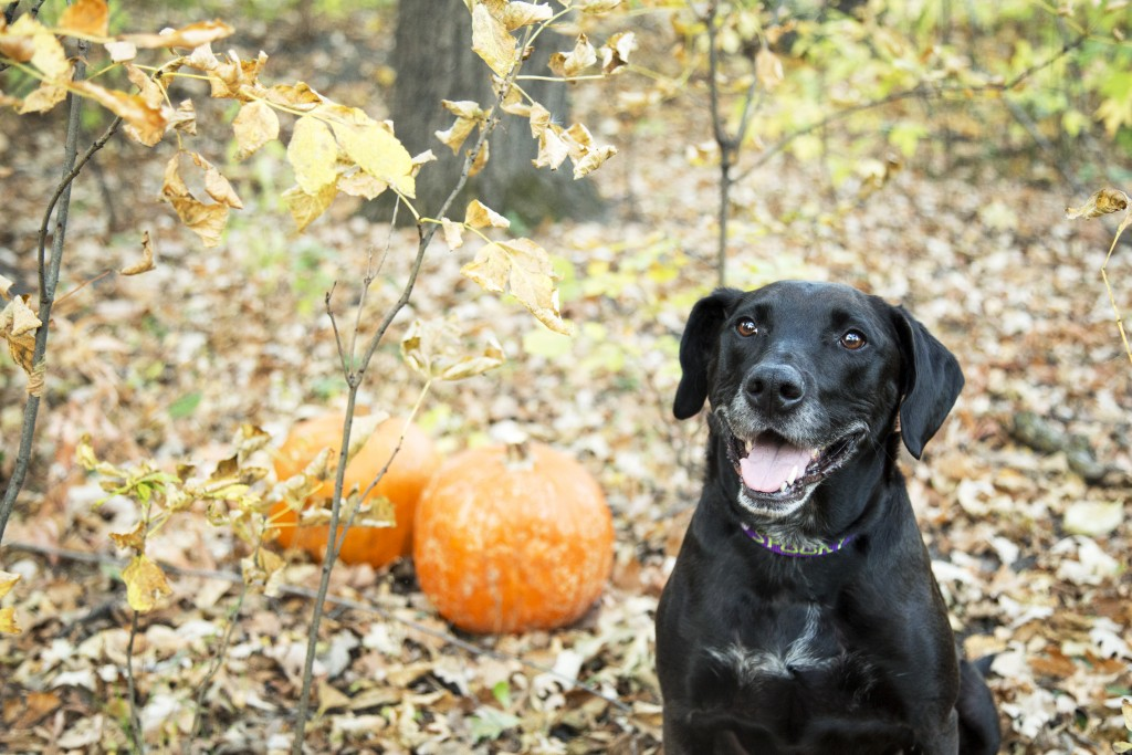 Dog outside in the fall