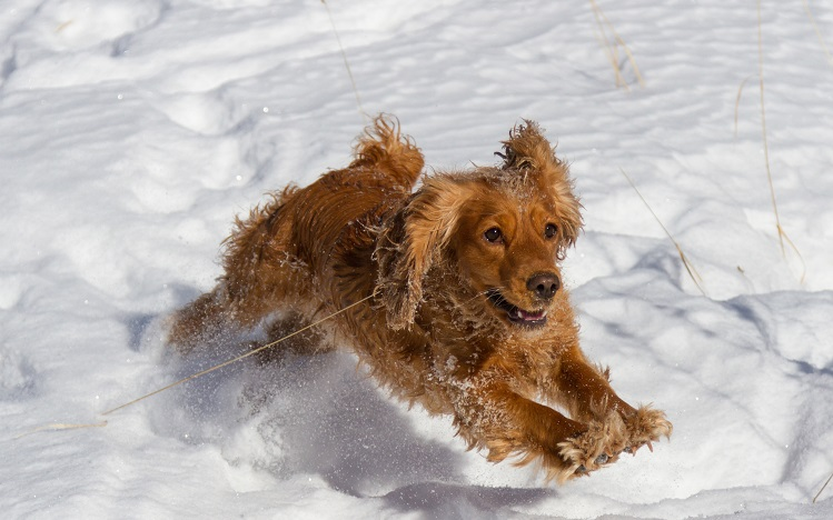 How to Exercise Your Dog And Stay Active in the Winter