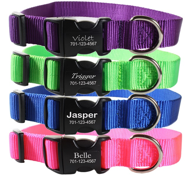 Buckle collars dogIDs