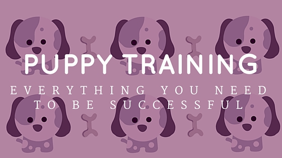 Puppy Training | Everything You Need To Be Successful