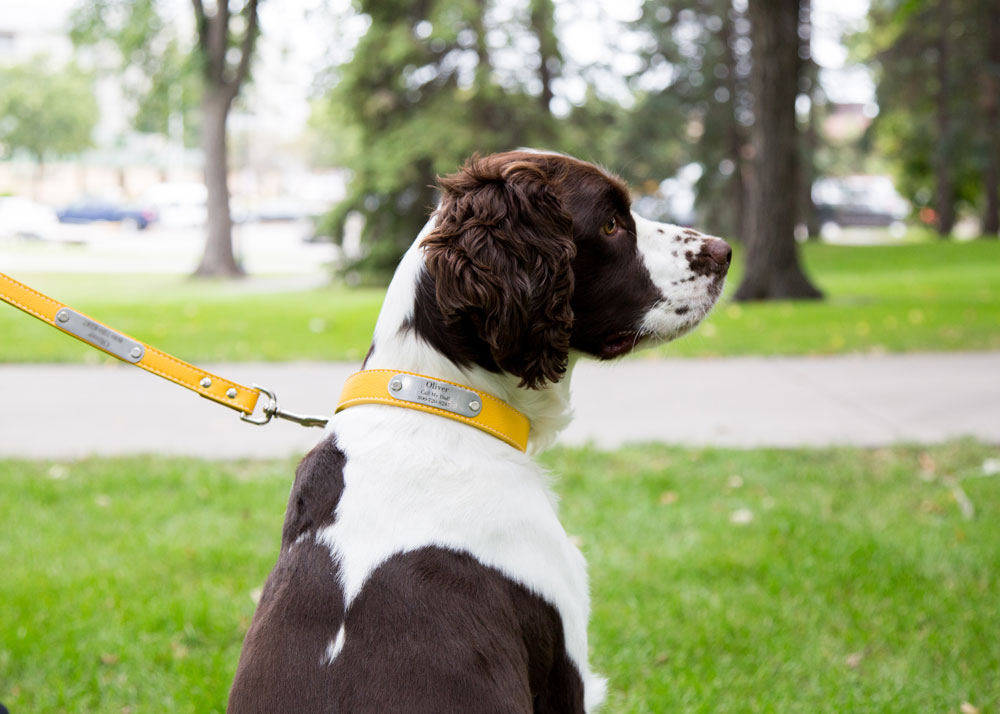 How to Care For Your Leather Dog Collar