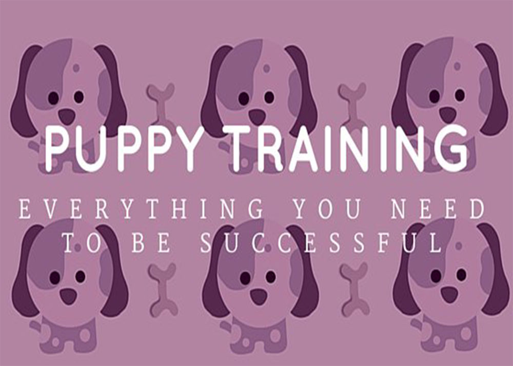 Puppy Training: Tips and Advice You Need to Be Successful