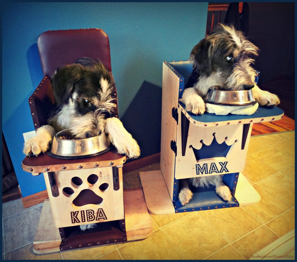 Max and Kiba eating in their personalized chairs!