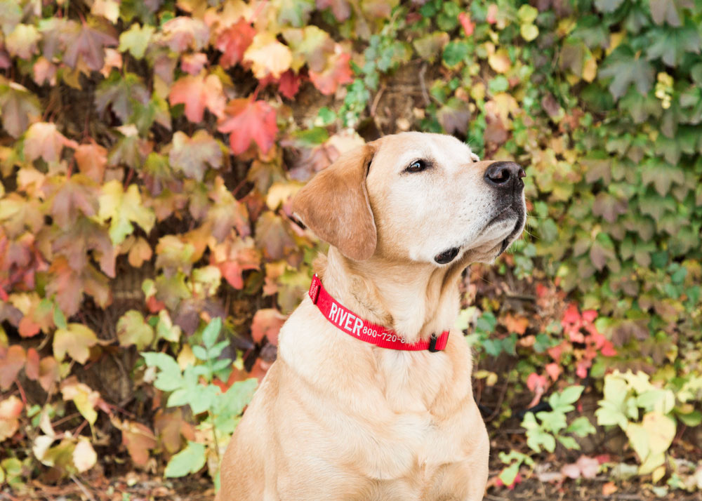 How To Care For Your Nylon Dog Collar