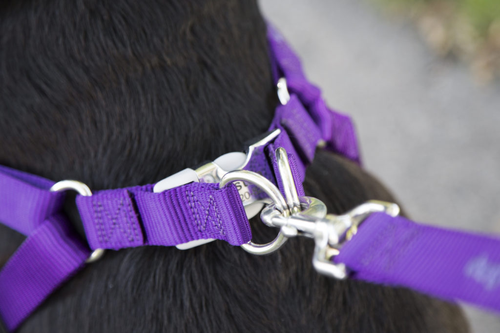 Connect your leash to the harness