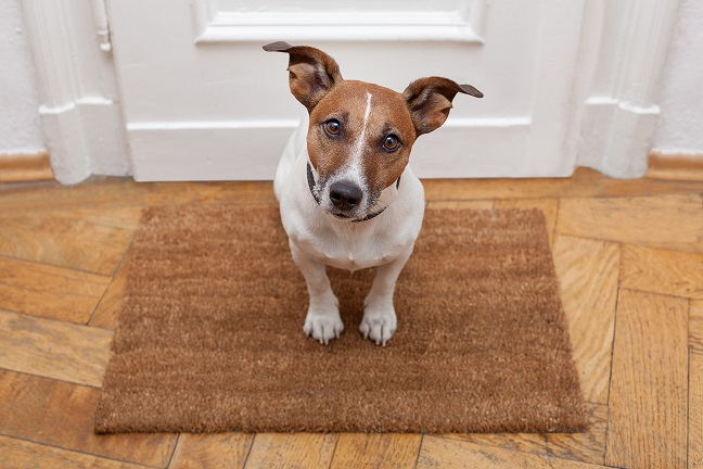 How to Keep Your Dog Calm When Holiday Guests Arrive