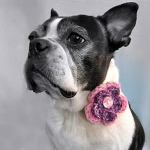 Collar flowers are a great and easy way to dress up your pet.