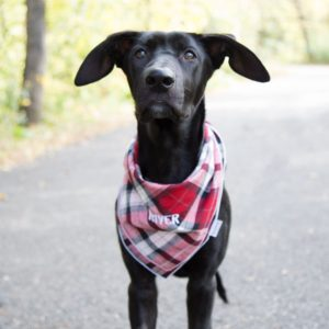 Personalized Bandanas are a great outfit for your dog