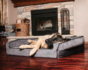 German Shepherd On Orthopedic Dog Bed