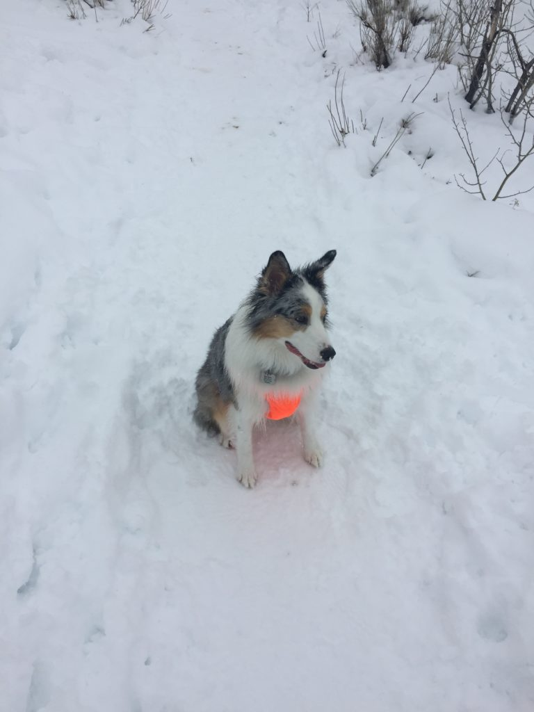 Dog in snow wearing skid plate