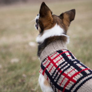 Small Dog in Classic Sweater