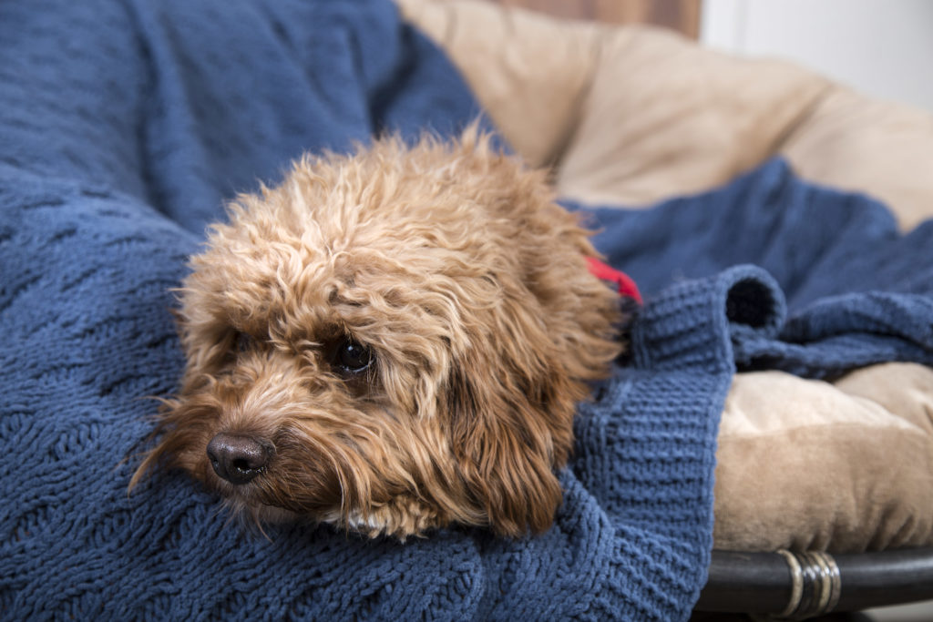 Leave a blanket that has your scent to calm your pet