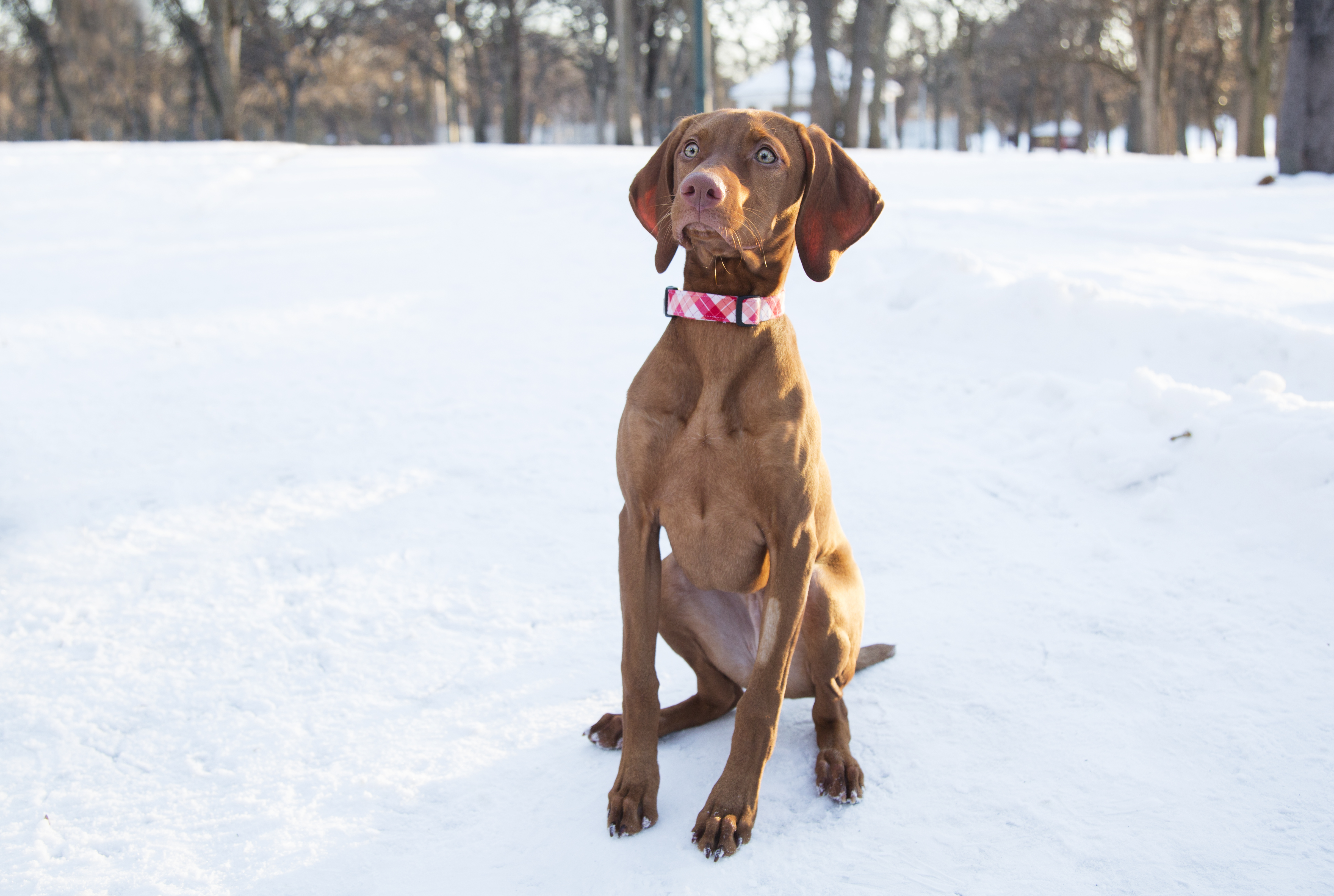 The Top 5 Training Tips From dogIDs