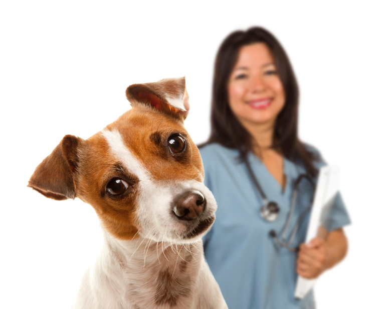 3 Training Tips That Will Make Your Vet Love Your Dog
