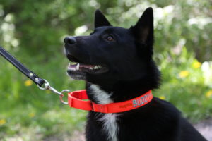 Personalized Martingale Dog Collar