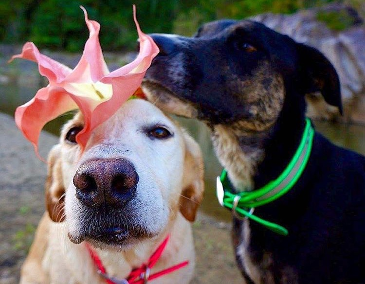 Know what harmful plants to keep away from your dog
