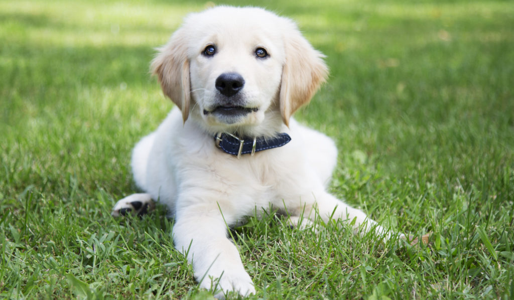 How to Choose the Right Dog Collar for Your Dog