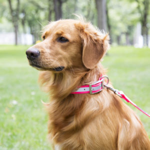 Waterproof Collars and Leashes