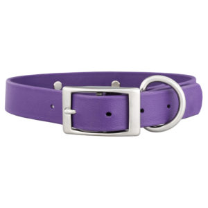 Traditional Style Buckle on Dog Collar