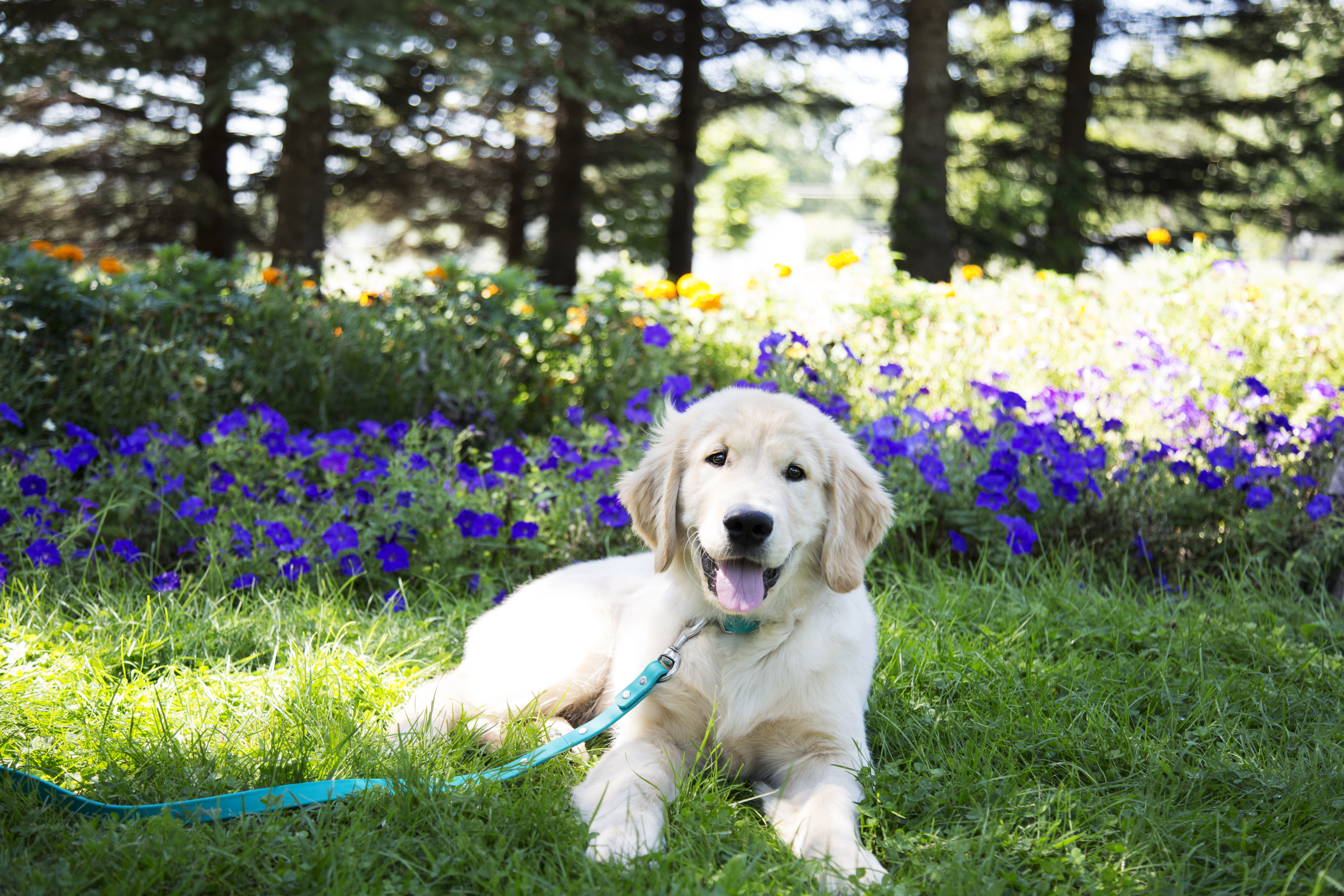 Common Plants In Your Home That Are Harmful To Your Dog