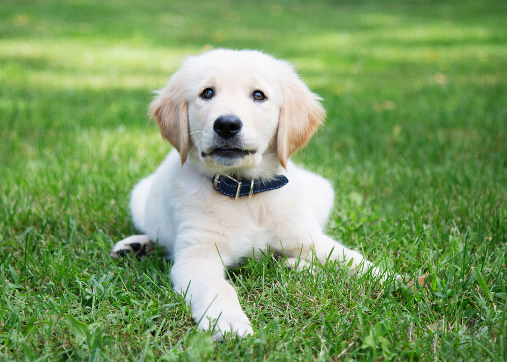The First Steps to Training your New Dog