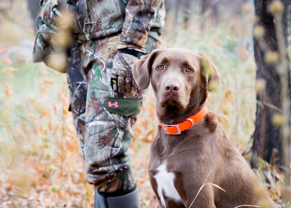 5 Safety Tips for Hunting Dogs