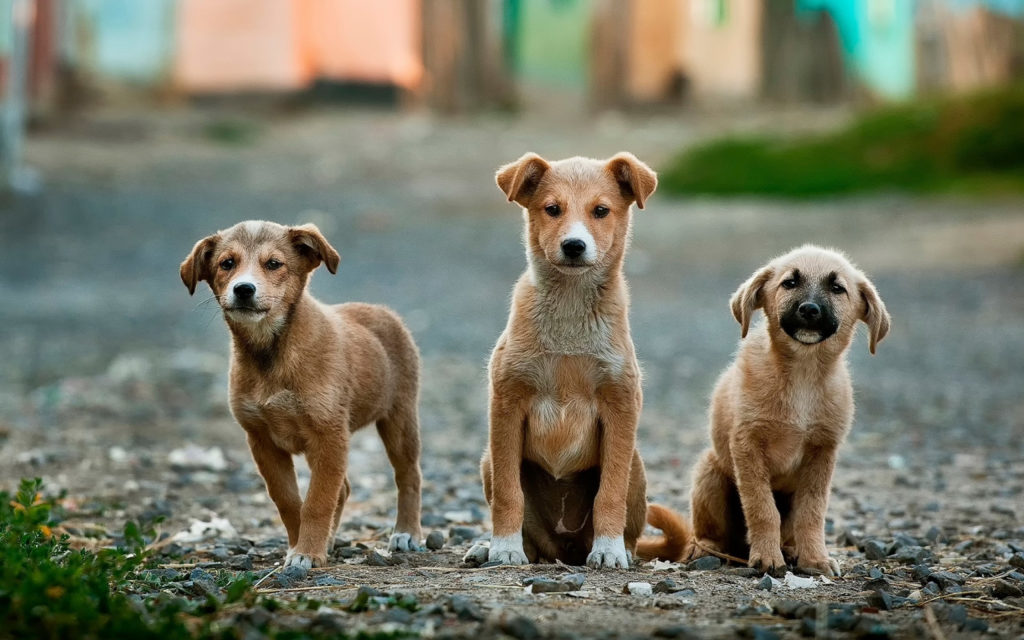 Group of dogs on the road