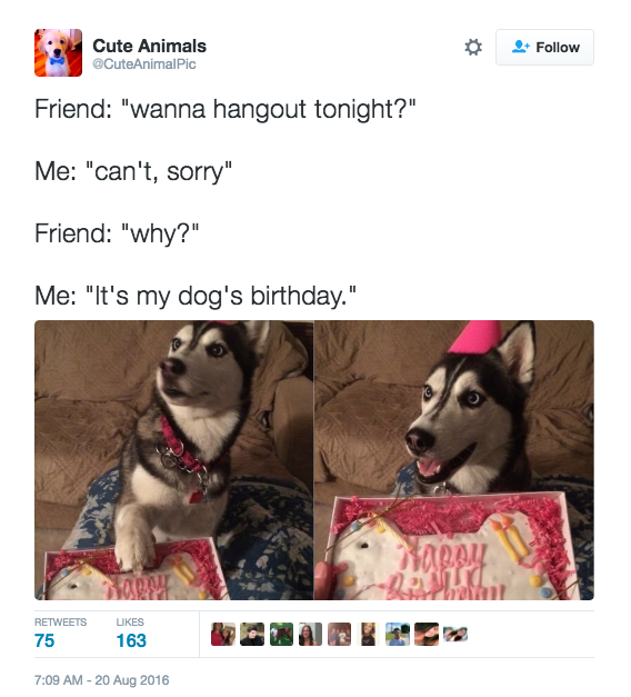 Dog's birthday tweet