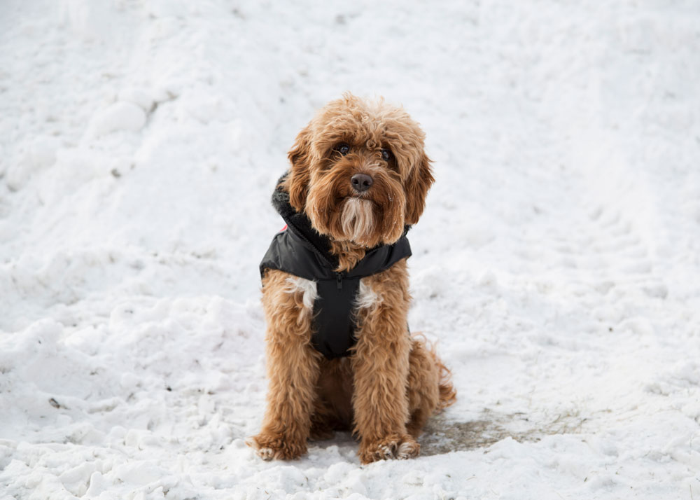 Ways To Keep You and Your Dog Cozy This Winter