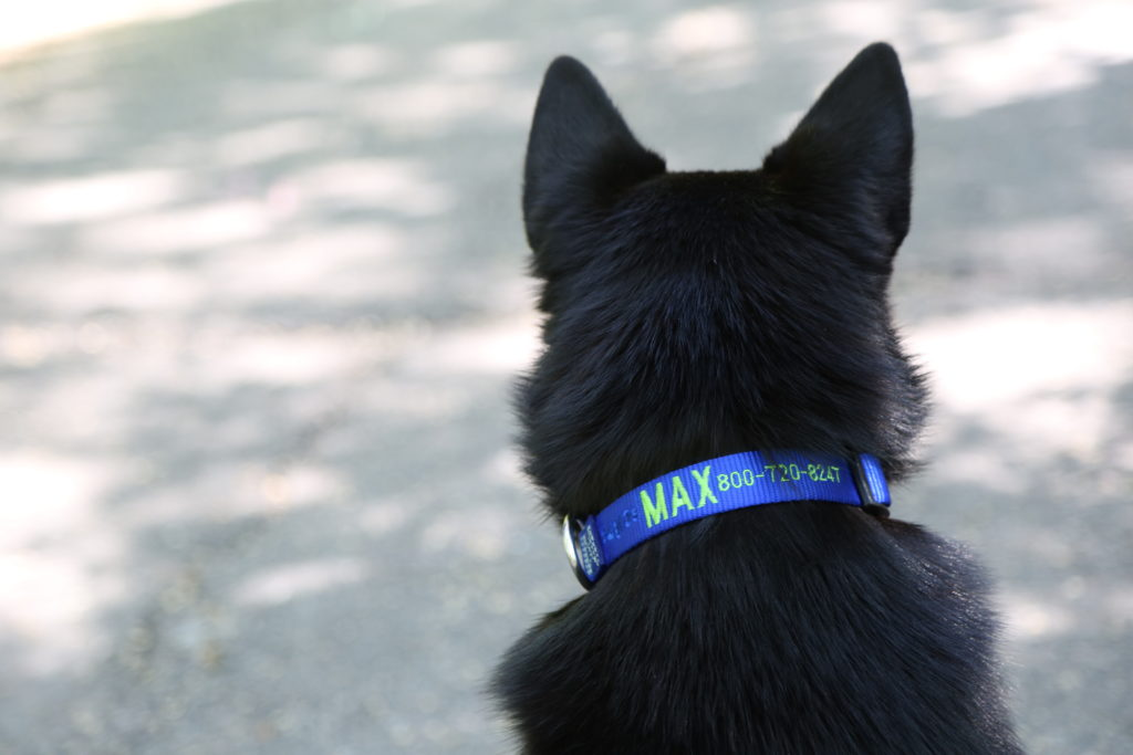 Dog wearing embroidered nylon collar