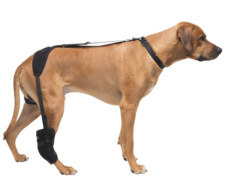 Therapy Wrap for Dogs