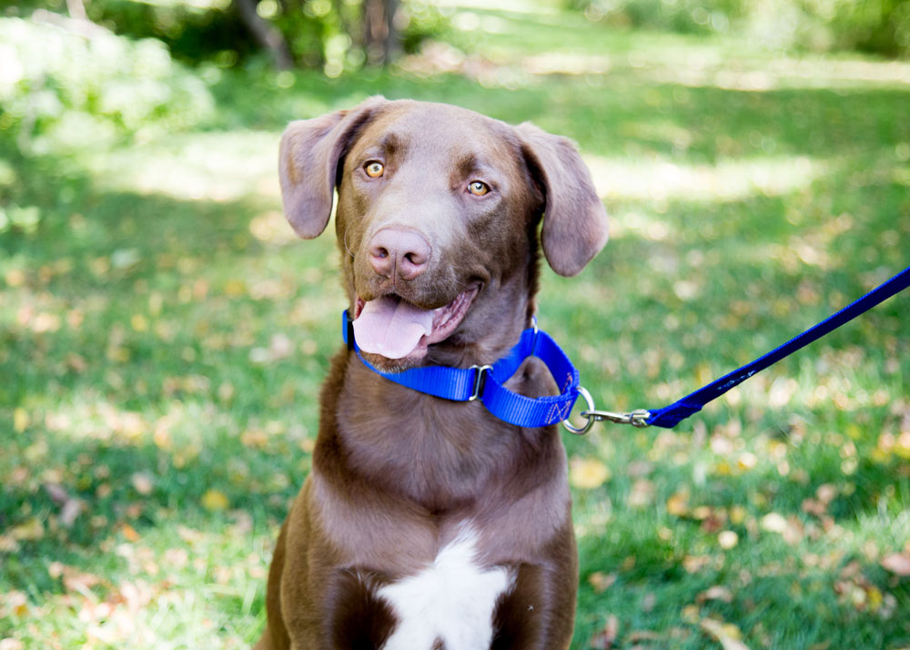 3 Benefits of Using a Backout Collar For Your Dog