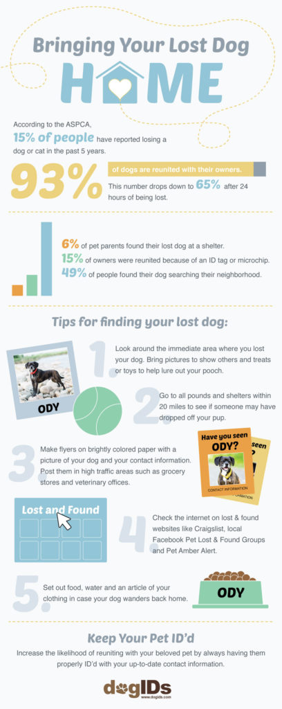 Bringing Your Lost Dog Home Infographic