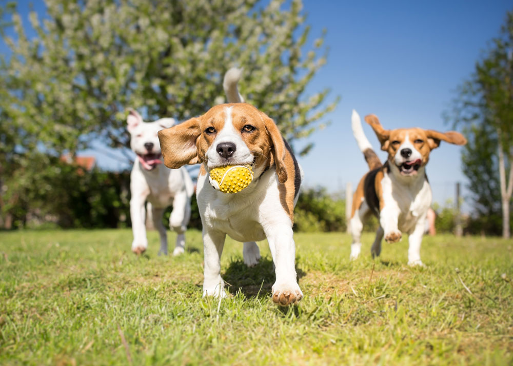 What to Know About Dog Daycare