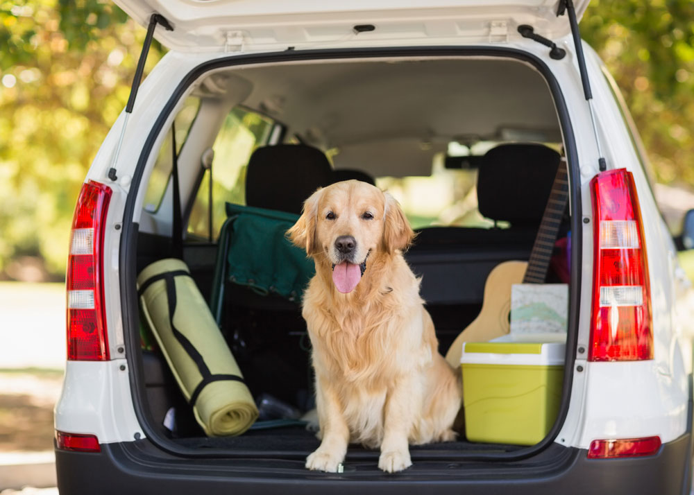 The Best Summer Vacation for You and Your Pup