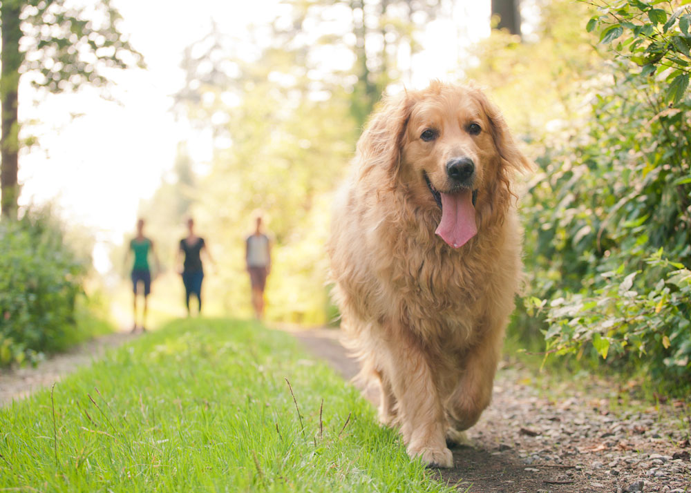 What to Do If Your Dog Gets Lost