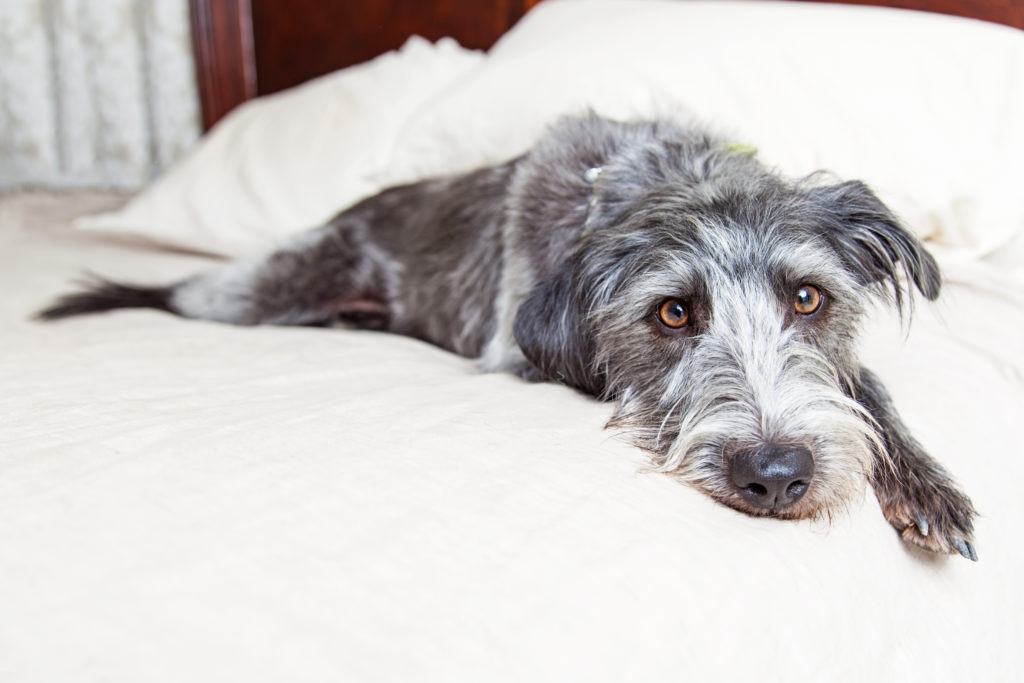 Here are some tips on helping your dog adjust to your new home.